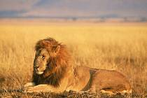 Druhy zařazené v Červeném seznamu Mezinárodního svazu ochrany přírody (IUCN) se nově rozrostly o širokou škálu zvířat a rostlin od lvů v západní Africe až po orchideje v Asii.