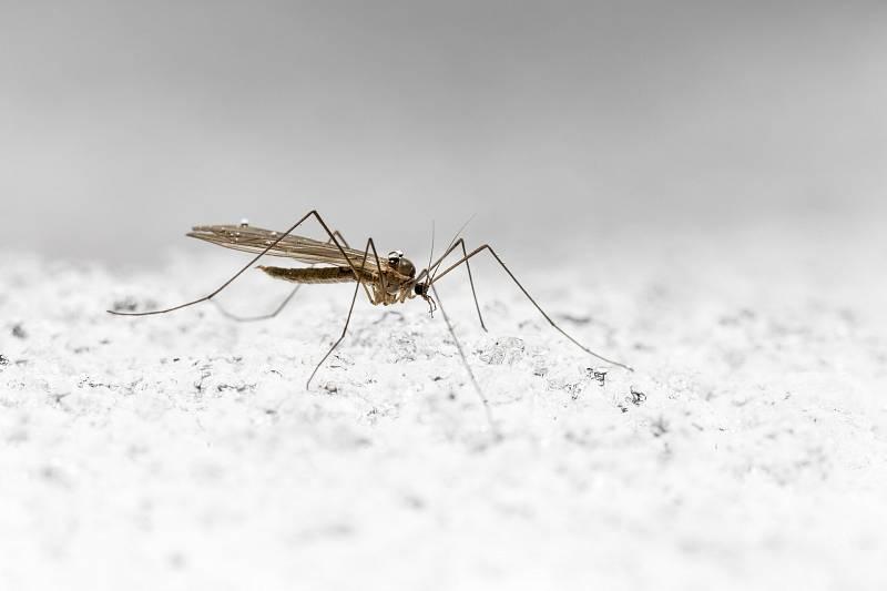 I přes současné covidové běsnění je malárie stále považována za jednu z hlavních příčin úmrtí na celém světě