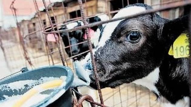 Zemědělci loni mléko vylévali. Na protest proti nízkým výkupním cenám.