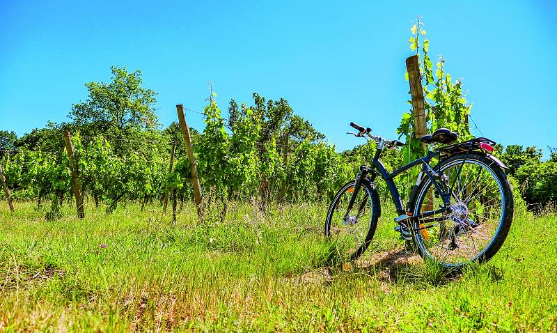 Cyklistika mezi vinicemi