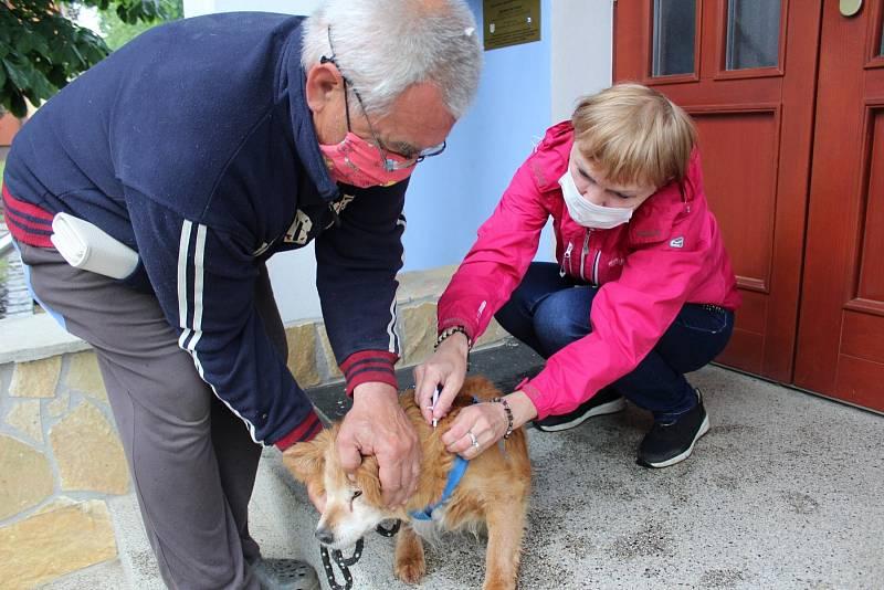 Pro psy bylo u nás pravidelné a povinné očkování proti vzteklině zavedeno už v roce 1953 a tato povinnost platí dodnes. Od loňského roku navíc platí, že aby byl záznam o vakcinaci proti vzteklině platný, musí být očkovaný pes také označený čipem