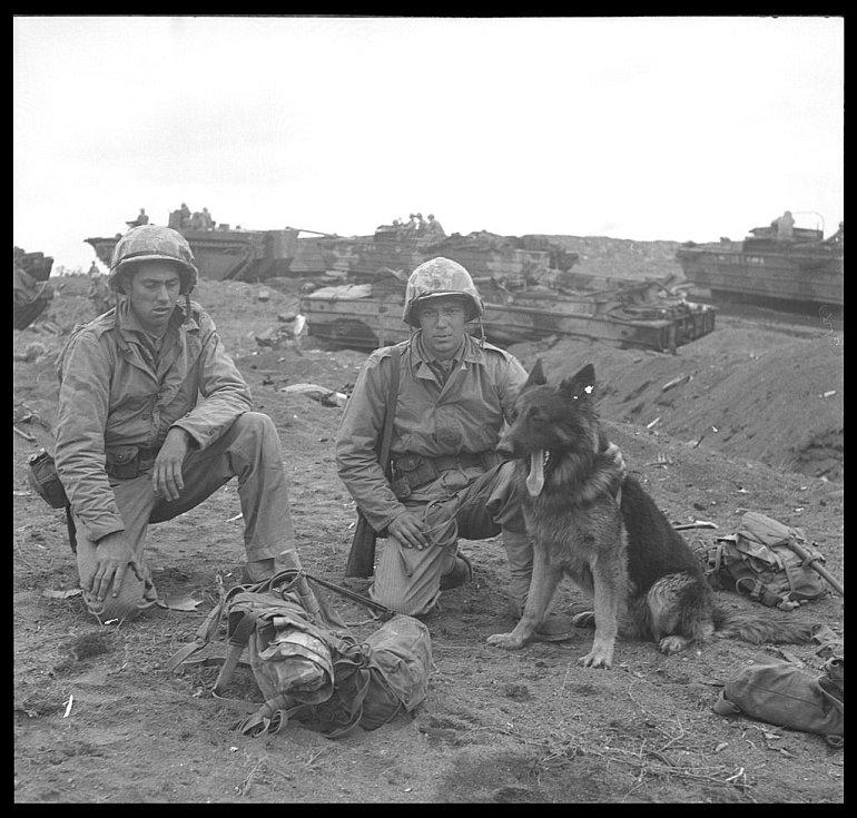 Mariňáci se psem na Iwodžimě
