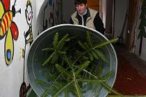 V pondělí 13. prosince zahájily prodej vánočních stromků také Městské lesy Prachatice. Nabízejí stromky jak z prořezávek, tak z plantáže. Z té putují na vánoční trh především jedle obrovské a bělokoré.