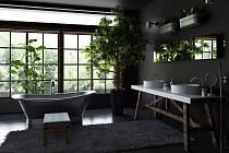 Rostliny v koupelně