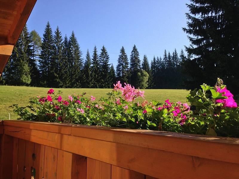 Zemina určená pro přesazování do květináčů má zadržovat vodu asoučasně iudržovat vzduch, aby kořeny rostlin byly dobře zásobeny kyslíkem.