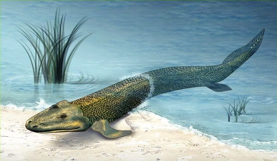 """Takto mohla pravěká ryba postupně """"přecházet"""" z vody na souš"""