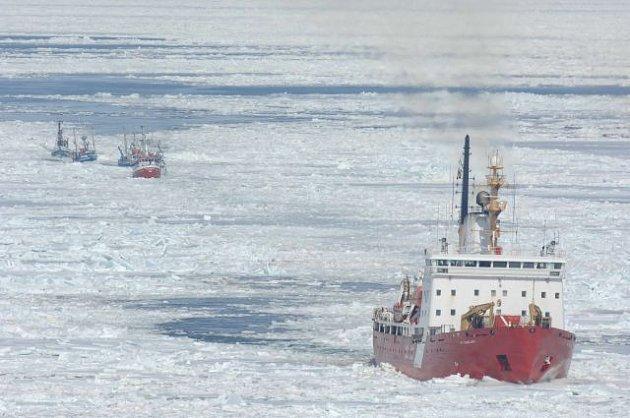 Ledoborce lovců tueních mláďat.