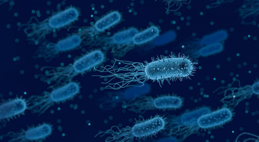 Bakterie - Ilustrační foto