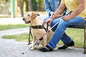 O NĚCO SNADNĚJŠÍ ŽIVOT. Nevidomým pomáhají čtyřnozí průvodci i technika.