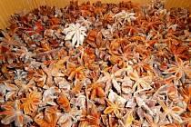 SZPI nevpustila na trh 750 kg plesnivého čínského badyánu.