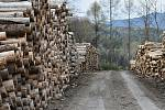Těžba dřeva kvůli kůrovci pod Sedlem na Litoměřicku