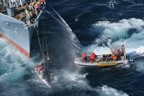 Japonští velrybáři s chyceným savcem a aktivisté z hnutí Greenpeace.