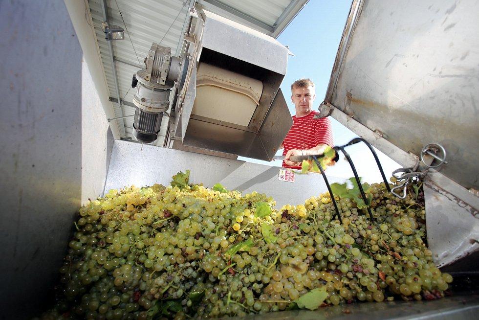 Polešovice, vinobraní