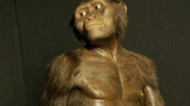 Samice australopitéka Lucy.