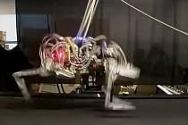 """Čtyřnohý robot známý jako Cheetah"""""""