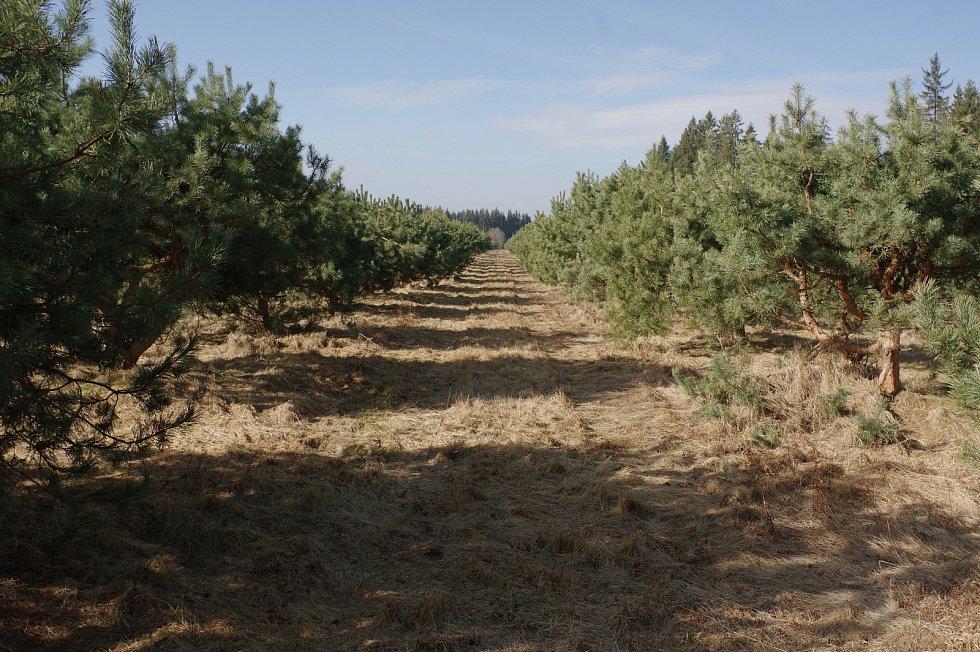 Výzkum stavu lesů ve střední Evropě v rámci projektu SUSTREE