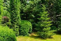 Četné evropské národy řadily jedli mezi posvátné stromy zimy. Její barva a vitalita i v nejtemnější části roku vždy okouzlovala