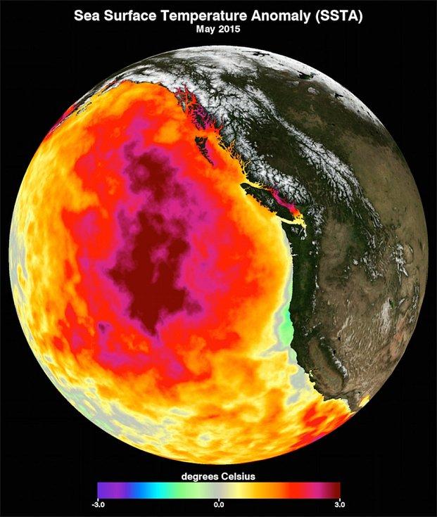 Datový snímek ukazuje měsíční průměrnou teplotu mořské hladiny v květnu 2015. Mezi lety 2013 a 2016 dominovala v severním Tichém oceánu velká masa neobvykle teplé vody, přezdívaná jako sliz