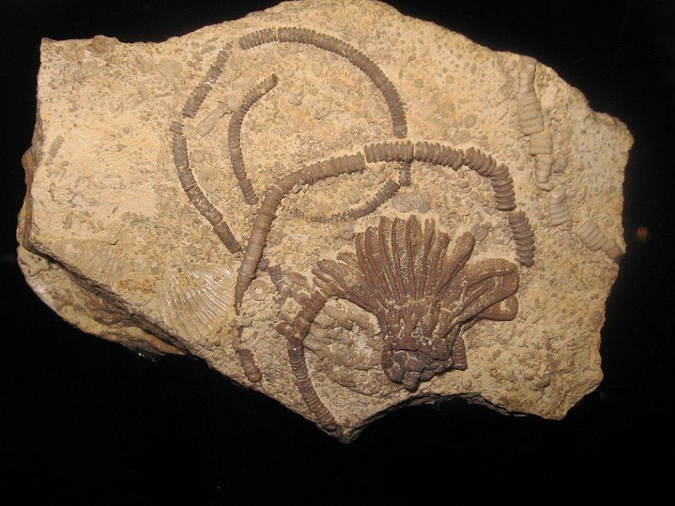 Zkamenělá lilijice