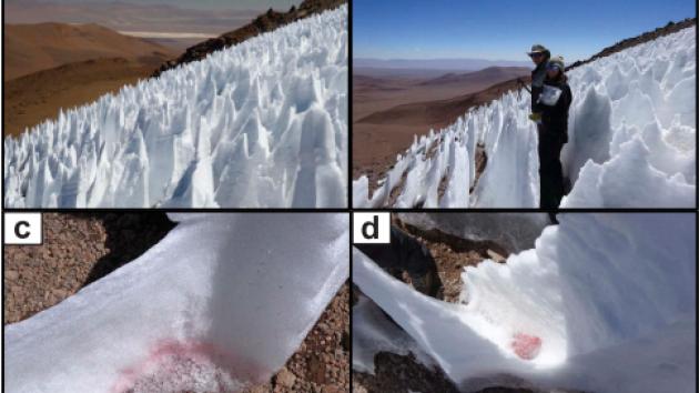 Kajícníci v Andách obsahují sněžné řasy, zjistili vědci