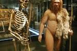 Kostra dospělého neandertálce vedle modelu vytvořeného na jejím základě v tokijském Národním muzeu přírody a vědy