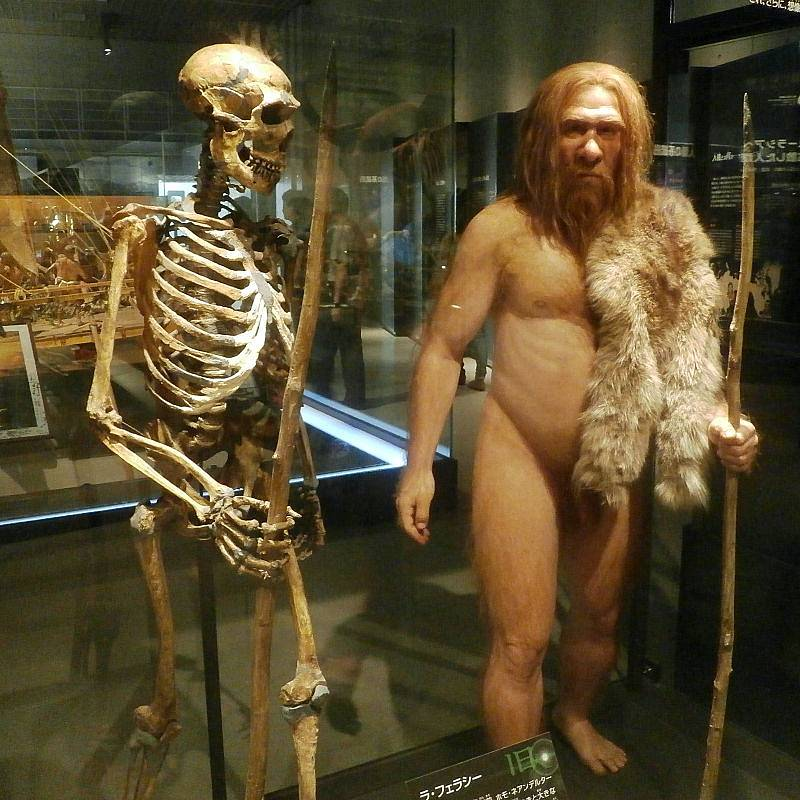 Kostra dospělého neandrtálce vedle modelu vytvořeného na jejím základě v tokijském Národním muzeu přírody a vědy
