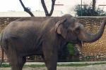 Slonice Flavia žila sama 43 let