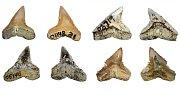 Fosilní žraločí zuby objevené na Madagaskaru