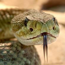 Hadi byli nejen zbraní biologickou, ale také psychologickou