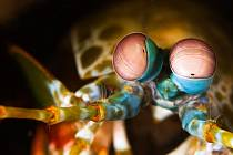 Velké oči straška vidí i to, co je zraku jiných tvorů dokonale neviditelné.