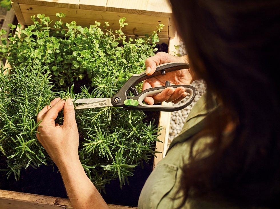 Nebojte se nůžek, především rostliny sdřevnatým stonkem, jako je třeba tymián, rozmarýn nebo šalvěj, pravidelně zastřihujte pro větší košatost.
