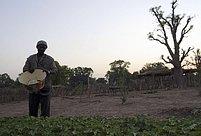"""Pěstuji arašidy a přitom mohu jednoduše pěstovat i tohle,"""" říká Douda Doumbia, třiapadesátiletý stařešina, zatímco zalévá malý záhonek jatrophy"""