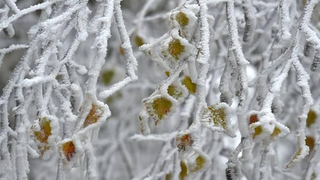 Strom pokrytý námrazou - ilustrační foto
