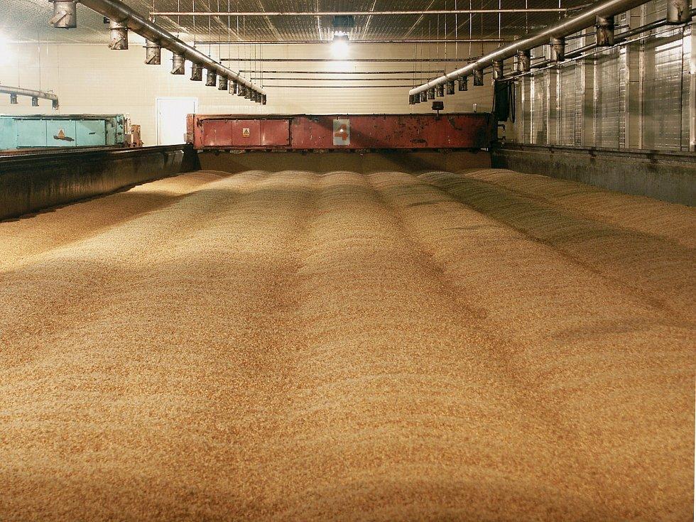 Výroba piva - klíčení ječmene