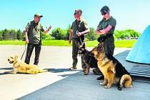 LABRADOR S PSOVODEM. Psi kromě drog a zbraní umí vyčenichat i chemikálie v paměťových médiích.