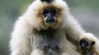 opice chodit nejlepší seznamka dlouhodobý vztah