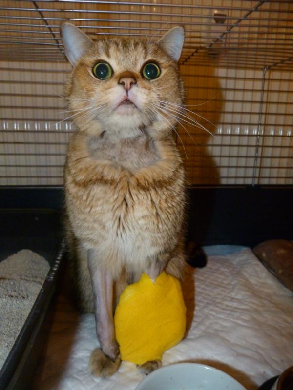Náš zvířecí pacient.