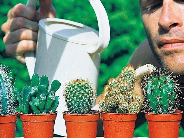 Kaktusy. Jsou přímo ideální společníci, kterým nevadí, že je na čas opustíme.