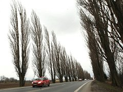 Stromové aleje podél silnic, které měly být podle původního plánu letos zlikvidovány, se zatím kácet nebudou. V úterý se na tom dohodli ministři dopravy Petr Bendl (ODS) a životního prostředí Martin Bursík (SZ).