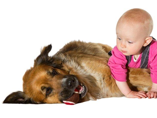 Psi jsou nejen nejlepším přítelem člověka, ale mohou také chránit děti před dýchacími problémy a infekcemi.