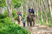 Jízda na slonech je oblíbená turistická atrakce. Skrývá se za ní však utrpení.