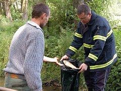 Plesenští rybáři a dobrovolní hasiči sbírali v Plesenském potoce uhynulé ryby.