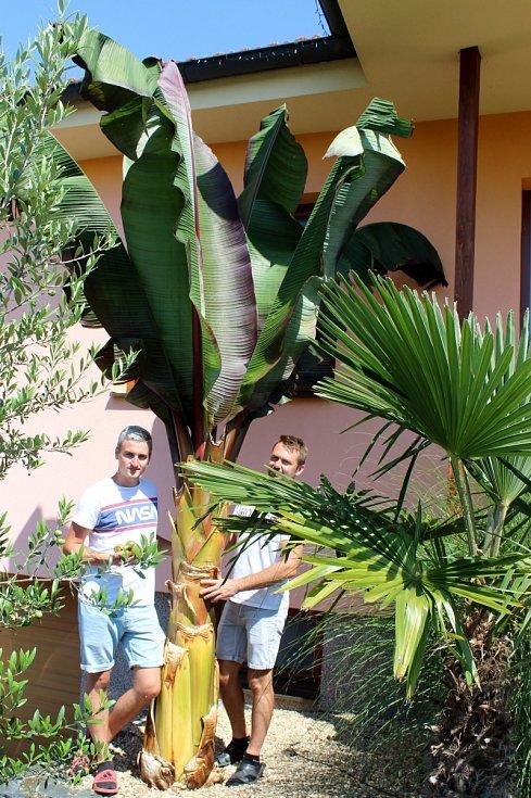 Miroslav Effenberger si pěstováním exotických rostlin plní sen.