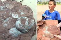 Desetiletý Číňan objevil hnízdo s fosilními dinosauřími vejci. Jeho stáří přesahuje 65 milionů let