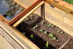 Jakmile skončíme s výsevem semen, necháme pařeniště zavřené až do doby, kdy rostliny začnou klíčit. Pak větráme vždy, když to počasí dovolí.