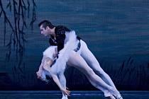 Royal Russian Ballet přiveze Labutí jezero