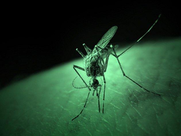 Krvácivé horečce dengue, kterou přenášejí moskyti, podlehl osmdesátiletý muž v Řecku.