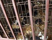 Vietnamská Hanoj žádá občany, aby přestali jíst psí maso