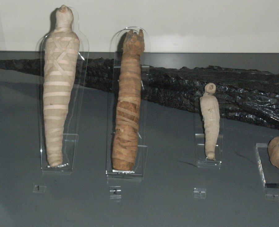 Mumie kočky, sokola a ptáčete ibise posvátného na výstavě věnované starověkému Egyptu v muzeu v Birminghamu