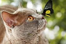 Kočka a motýl - Ilustrační foto